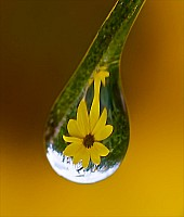 Water Droplet Refraction