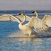 Splash Ballet