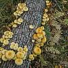 Mushroom Log Environment (B)