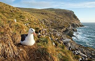 Albatross at Westpoint
