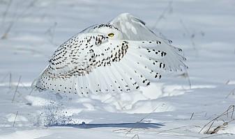 Snowy Eye