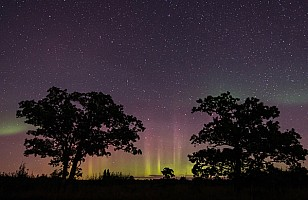 Oak Savannah Aurora Borealis