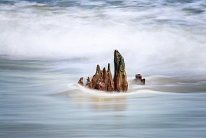 Driftwood - Botany Bay Beach