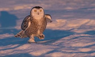 Snowy Walking