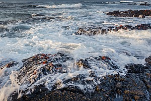 Sally Lightfoot Crabs in Waves