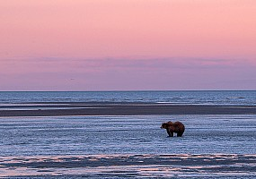 Grizzly at Twilight