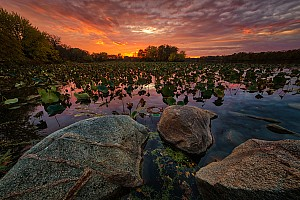 Lillypad Sunset