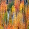 Fall Abstract Pano