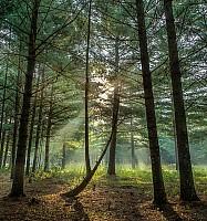 Crex Morning Rays