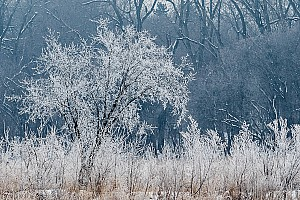 Hoarfrost at Woodlake