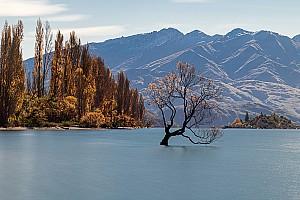 Lone Wanaka Tree