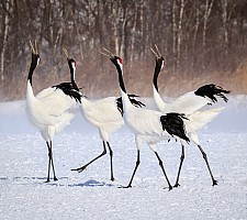 Crane Quartet