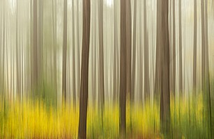 Pines in Motion