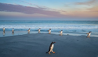Penguins After Sunset