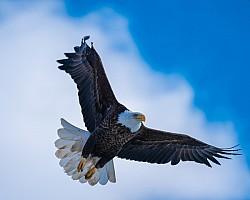 Eagle-on-a-cloud