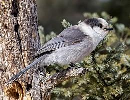 Birdie In The Bog