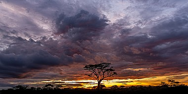 Sunset Clouds with Acacia