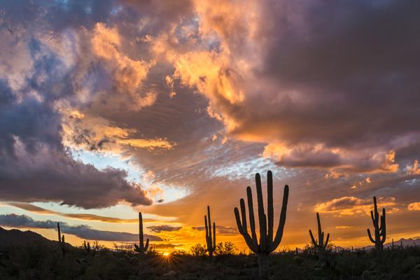 General 1st Place: Saguaro Sunset