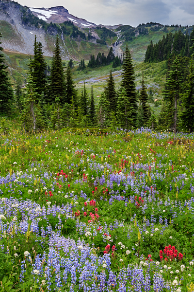 Mt. Rainer Wildflowers